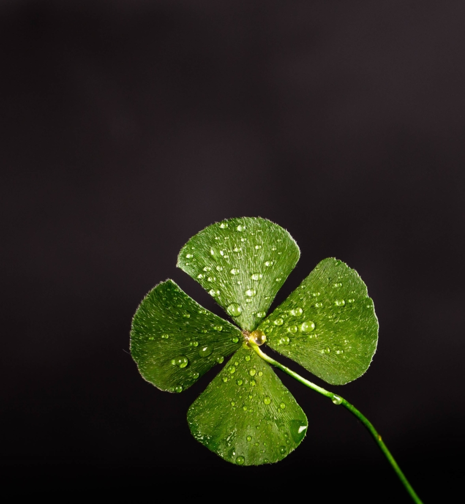 Shallow-focus-photography-of-four-leaf-clover-705310