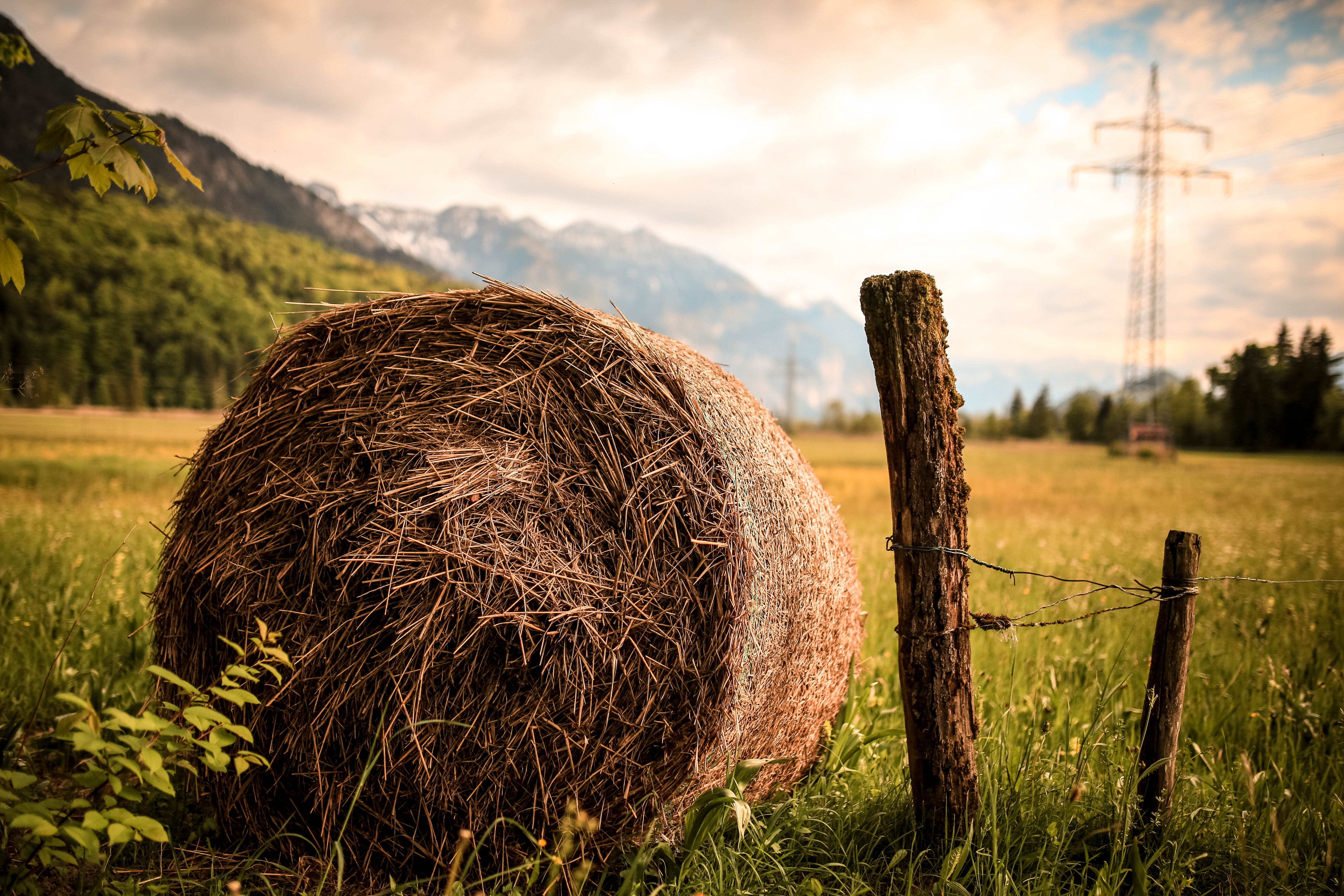 Farm image - Photo by Tobi from Pexels